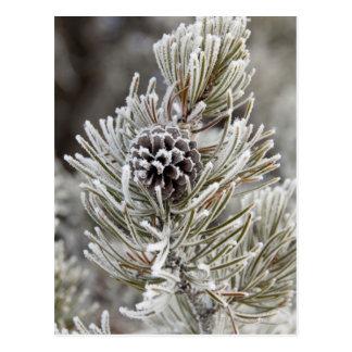 Cartão Postal Fim-acima do cone congelado do pinho, Yellowstone