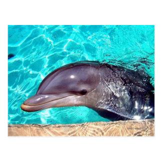 Cartão Postal Fim-Acima do golfinho