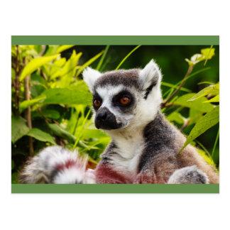 Cartão Postal fim-acima do lemur no selo