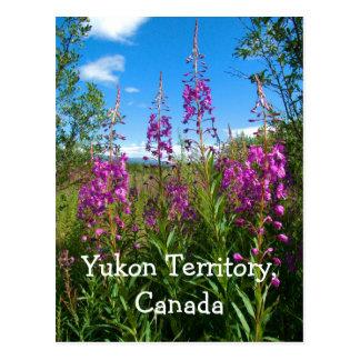 Cartão Postal Fireweed de Yukon