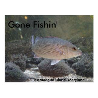 Cartão Postal Fishin ido na ilha de Assateague, DM