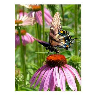 Cartão Postal fleur do la do sur do papillon