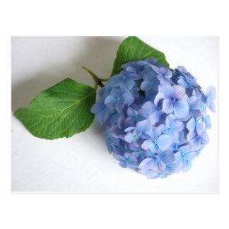 Cartão Postal flor
