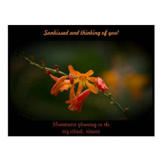 Cartão Postal Flor alaranjada de Montbretia