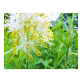 Cartão postal - flor Amarela