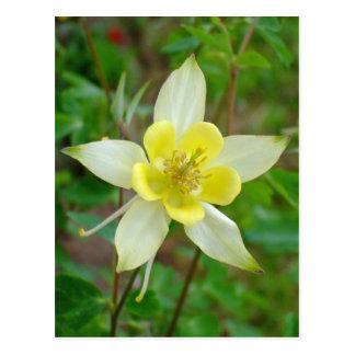 Cartão Postal Flor aquilégia no amarelo