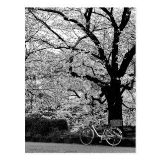 Cartão Postal Flor & bicicleta: Japão