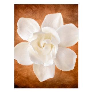 Cartão Postal Flor branca da flor do Gardenia floral