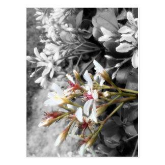 Cartão Postal Flor branca no fundo preto e branco