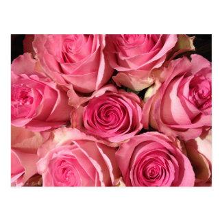 Cartão Postal Flor cor-de-rosa dos rosas