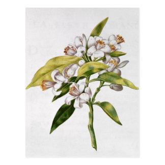 Cartão Postal Flor da árvore alaranjada, 'de La Guirlande de