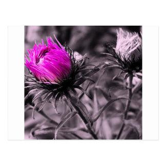 Cartão Postal flor da cor com preto e branco