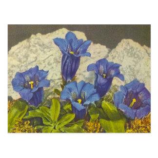 Cartão Postal Flor da genciana