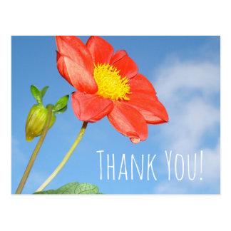 Cartão Postal Flor da morango