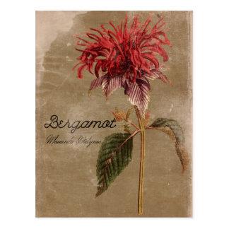 Cartão Postal Flor da planta da bergamota do estilo do vintage