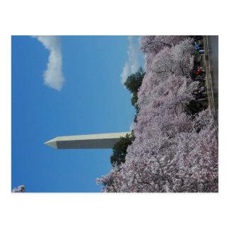 Cartão Postal Flor de cerejeira 2 do Washington DC