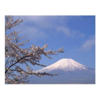 Cartão Postal Flor de cerejeira e Monte Fuji 2