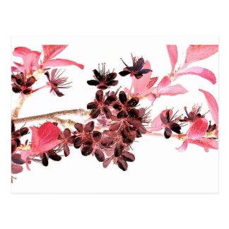 Cartão Postal Flor de cerejeira japonesa cor-de-rosa de