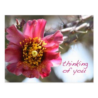 """Cartão Postal Flor de Cholla """"que pensa de você """""""