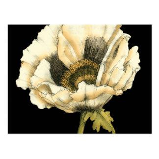 Cartão Postal Flor de creme da papoila no fundo preto