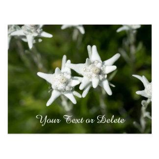 Cartão Postal Flor de Edelweiss