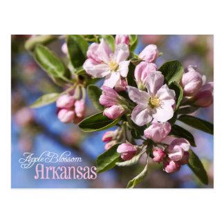 Cartão Postal Flor de estado de Arkansas: Apple floresce