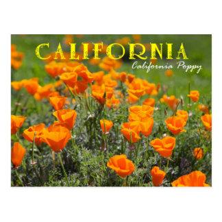Cartão Postal Flor de estado de Califórnia: Papoila de