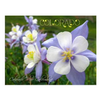 Cartão Postal Flor de estado de Colorado: Montanha rochosa