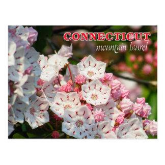 Cartão Postal Flor de estado de Connecticut: Louro de montanha