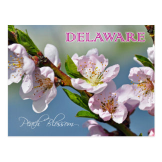Cartão Postal Flor de estado de Delaware: Flor do pêssego