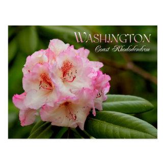 Cartão Postal Flor de estado de Washington: Rododendro de costa