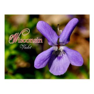 Cartão Postal Flor de estado de Wisconsin: Violeta