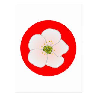 Cartão Postal Flor de kirsch cherry blossom