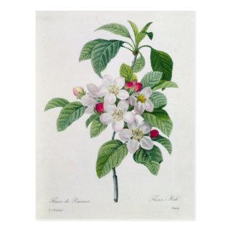 Cartão Postal Flor, 'do DES de Les Choix mais Belles