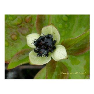 Cartão Postal Flor do Dogwood do anão, ilha de Unalaska