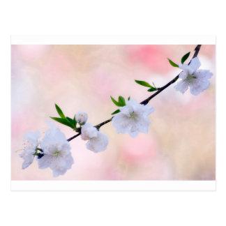 Cartão Postal Flor do pêssego