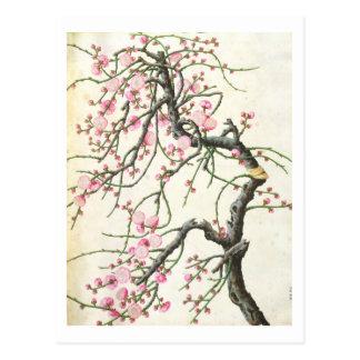 Cartão Postal Flor do pêssego (cor no papel)