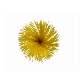Cartão Postal Flor dos espaguetes