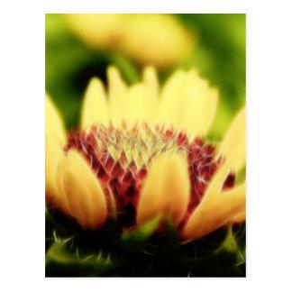Cartão Postal Flor em botão geral