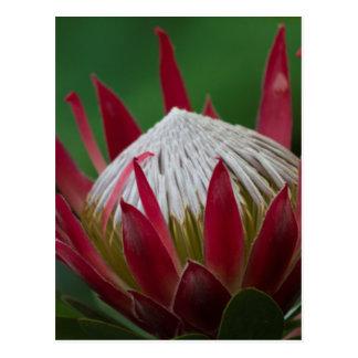 Cartão Postal flor exótica