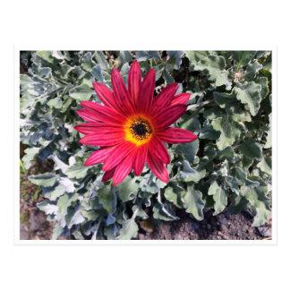 Cartão Postal Flor pura natureza