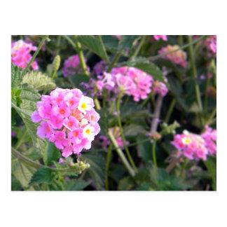 Cartão Postal Flor selvagem cor-de-rosa