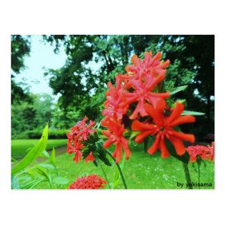 Cartão postal - flor Vermelha
