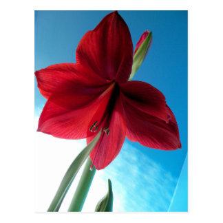 Cartão Postal flor vermelha vívida do Amaryllis 108a