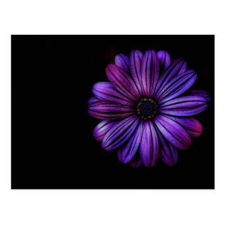 Cartão Postal Floral, arte, design, bonito, novo, forma