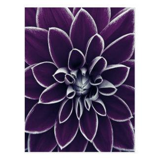 Cartão Postal Floral roxo bonito