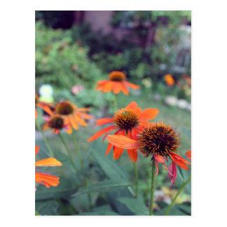 Cartão Postal Flores