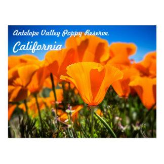 Cartão Postal Flores alaranjadas bonitas da papoila em um campo
