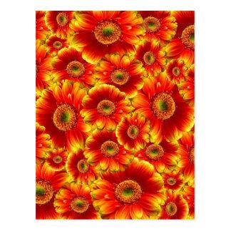 Cartão Postal Flores alaranjadas brilhantes