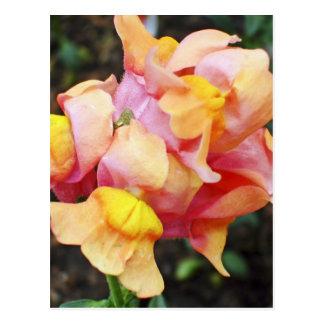 Cartão Postal Flores alaranjadas brilhantes de Snapdragon